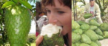 owoc na raka